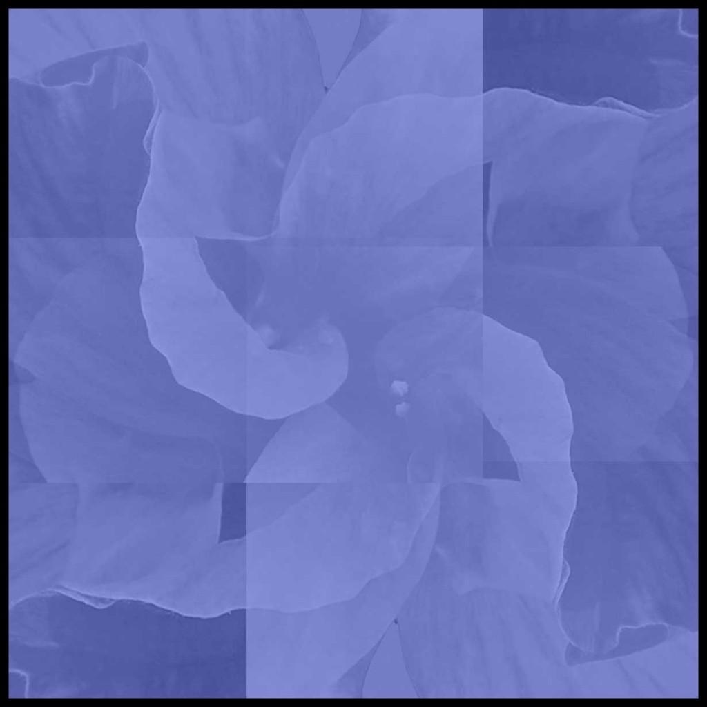 Flower-Mix-Colors-Purple
