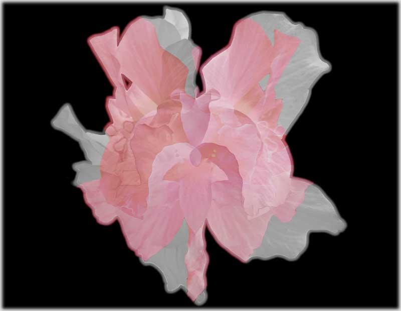 Flower-Mix_Valentine2