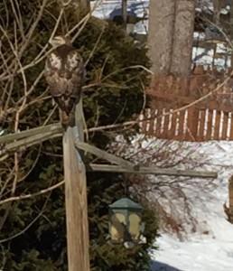 """""""bird feeder"""""""